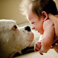La curiosidad de los perros por los recién nacidos