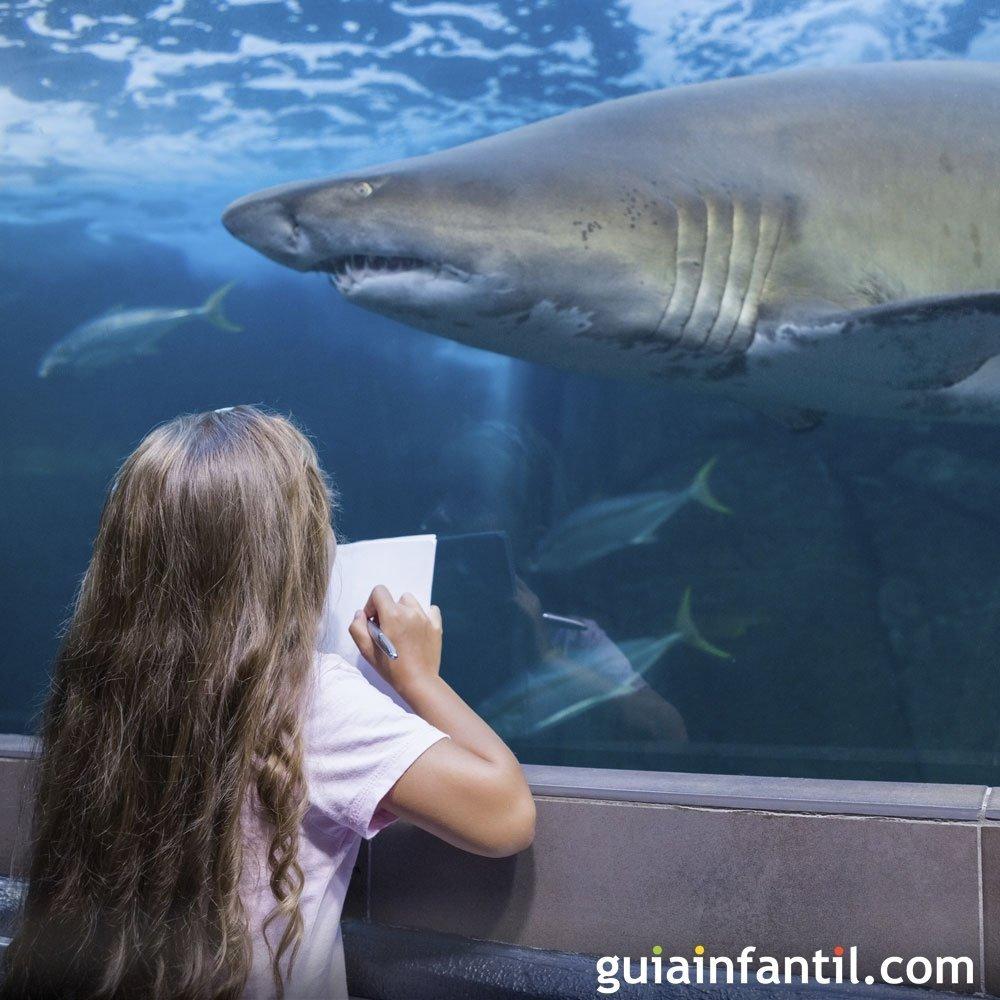 La preguntas de los niños sobre el tiburón