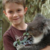 Preguntas de los niños sobre los koalas