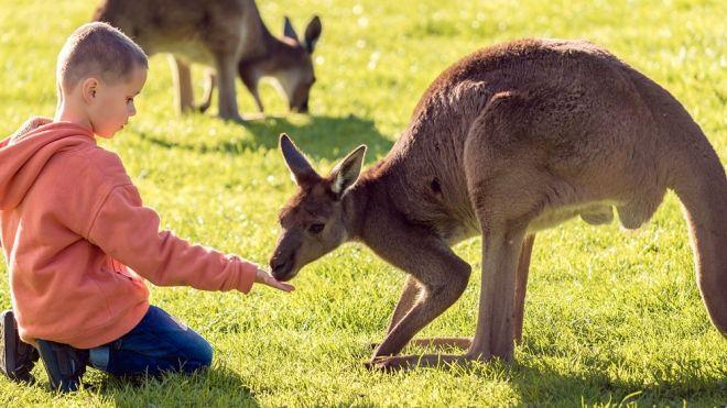 d685dd4b8 Los canguros. Curiosidades sobre este animal para contar a los niños