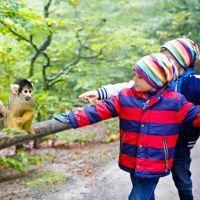 Los monos saimiri. Curiosidades sobre este divertido animal para los niños