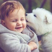 Los perros no son juguetes para los niños