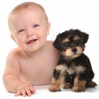 Las mejores razas de perro si tienes hijos