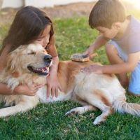 La responsabilidad de los niños con sus mascotas