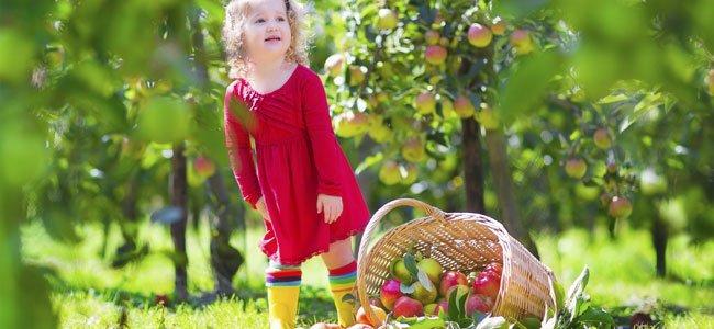 Alimentos ecol gicos dieta sana para ni os - Luz de vida productos ecologicos ...