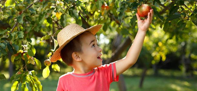 Frutas de otoño para niños, frutas de temporada