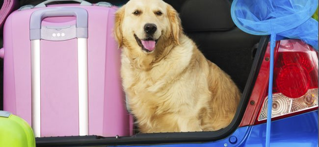 Viajar con mascotas en avión