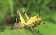 Las antenas de los insectos.