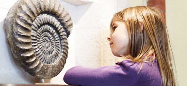 Niña mira un fosil