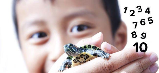 Técnica de la tortuga contra las rabietas