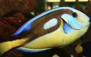 Por qué respiran los peces bajo el agua.