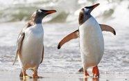 Por qué los pingüinos no pueden volar.