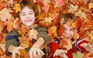 Por qué las hojas de los árboles cambian de color en otoño