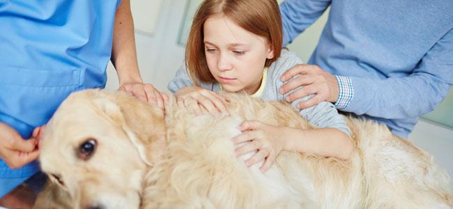 Ayudar al niño a superar la muerte de su mascota