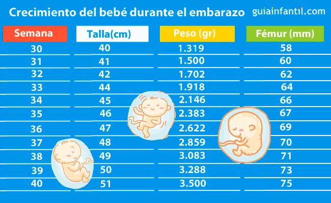 Tabla para saber cu nto mide y pesa el beb a lo largo del embarazo - 26 semanas de embarazo cuantos meses son ...