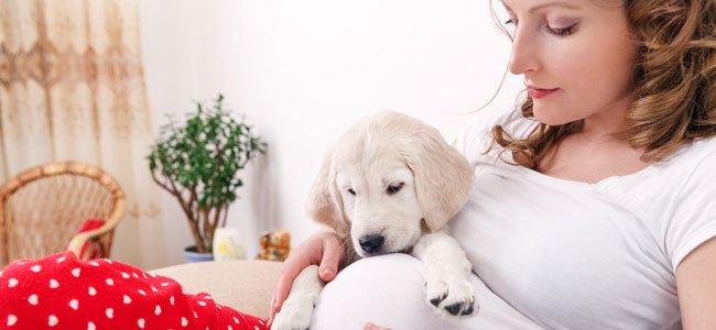 ¿Pueden predecir las mascotas un embarazo?