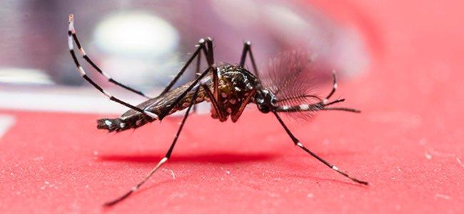 Países que no recomiendan embarazos por el Zika