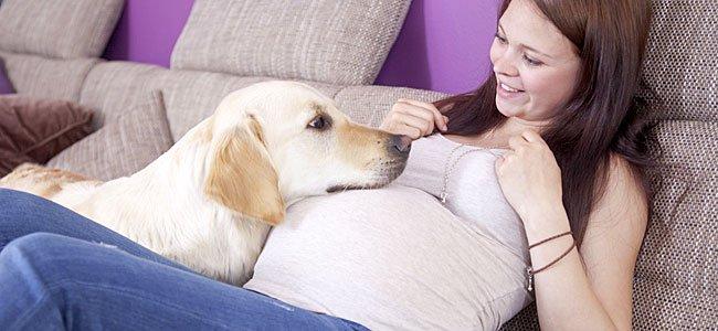 Prepara tu mascota antes de que nazca tu bebé