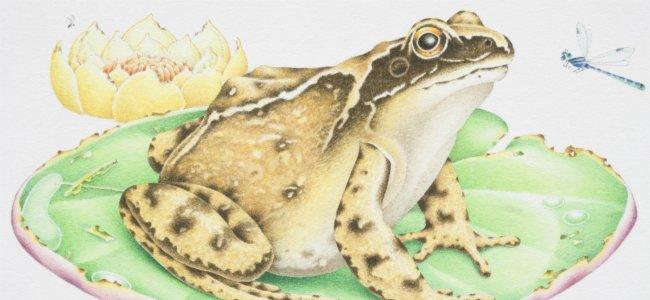 Fábula de Esopo: La rana y el buey.