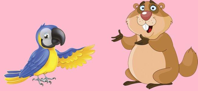 El guacamayo y la marmota. Fábulas de Iriarte
