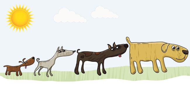 Por qué los perros se huelen la cola