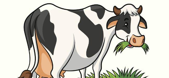 Canciones infantiles El baile de las vacas