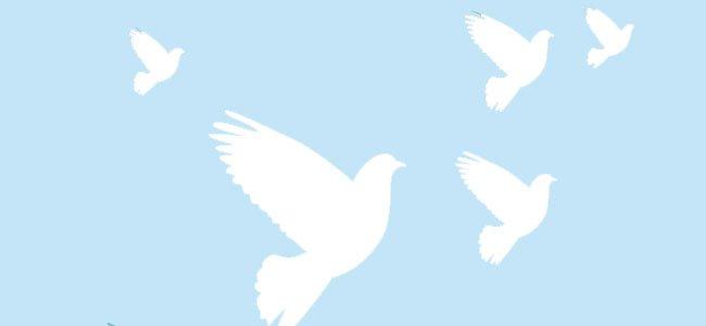 Canción la paloma blanca