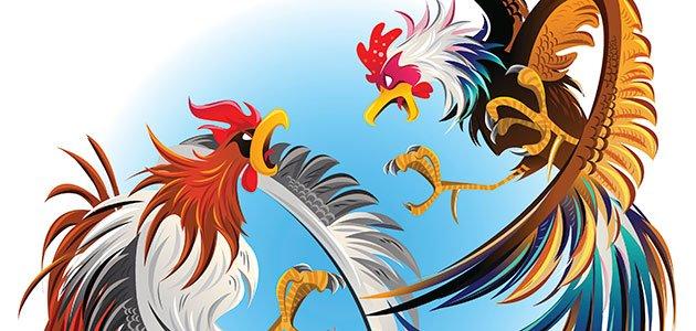 Gallos Coloridos Dibujos Animados: Los Dos Gallos. Fábulas De La Fontaine