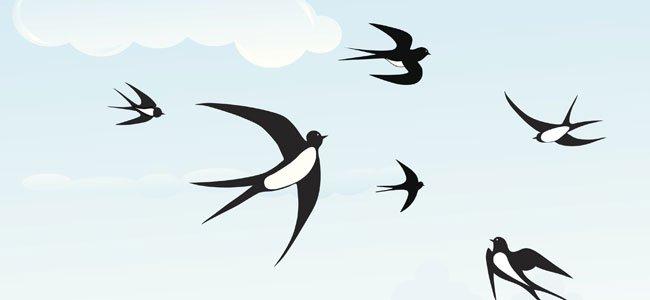 Golondrinas volando