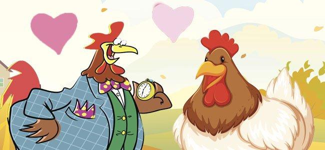 Boda entre un gallo y una gallina