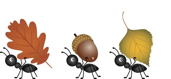 Hormigas llevan hojas
