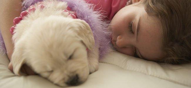 Niña duerme con perro