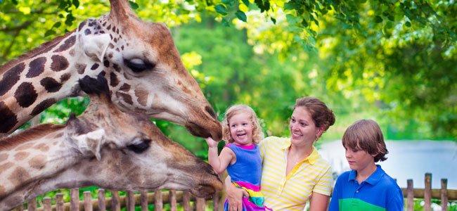 Preguntas sobre los animales favoritos de los niños