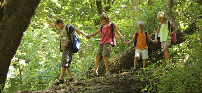 Niños caminan por bosque