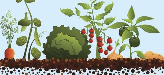 Poemas para aprender las verduras y hortalizas