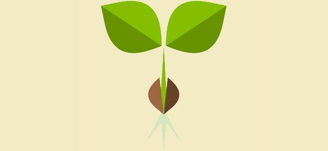 Poema corto La semilla