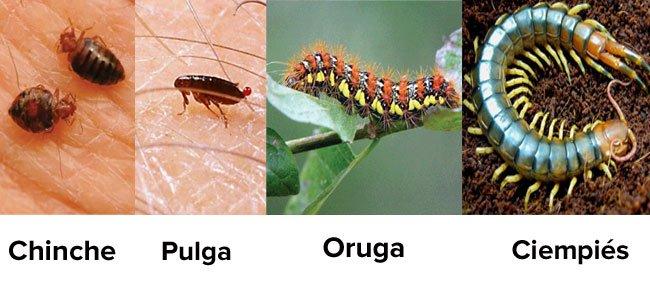 Insectos que pican a los niños