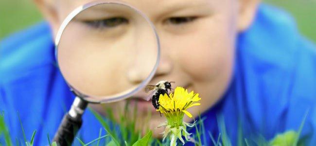 Las picaduras de abeja en los niños