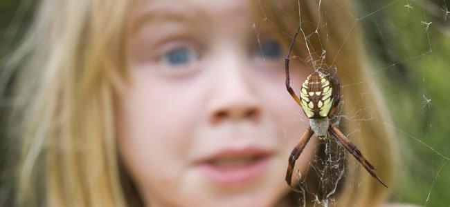 Niño mira araña