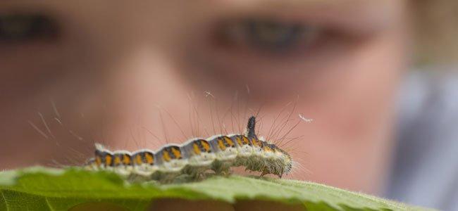 Insectos que pueden picar a los niños