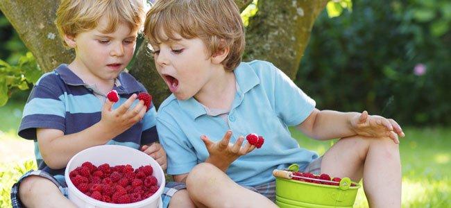 Niños comen frambuesas