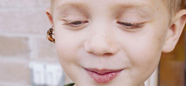 Niños alérgicos a la picadura de abeja o avispa