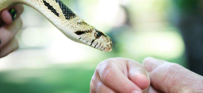 Mordeduras de serpiente en niños