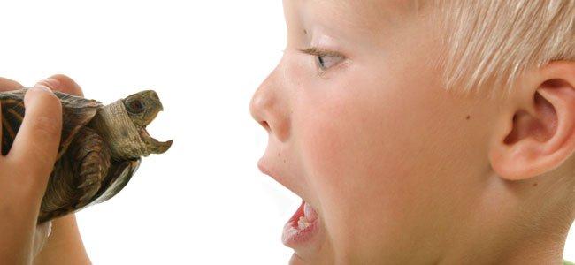 Mordeduras de algunos animales a los niños